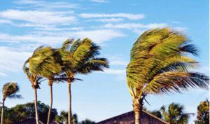 WindPalms