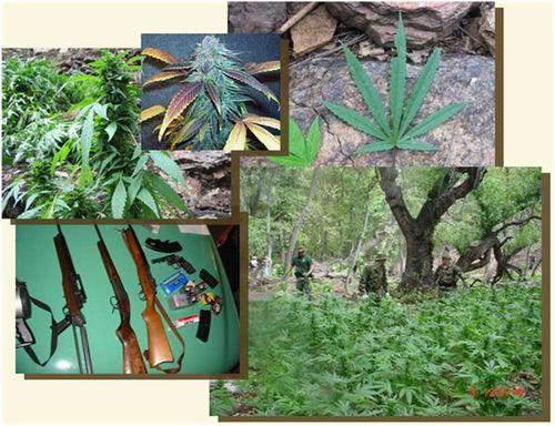Marijuana_Illegal