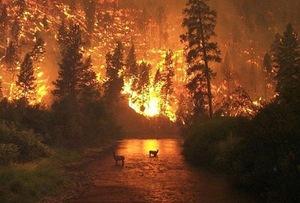 Forestfire